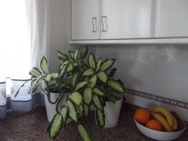 zona verde en la cocina